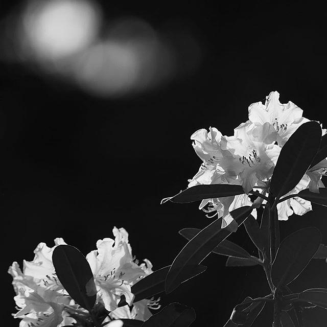 hear a transparent sound.....#worldcaptures #royalsnappingartists#myighub #Bnw_captures #bnw_fabulous #all_bnwshots #sombrebw #friendsinbnw #Rsa_bnw #Rustlord_unity #bnw_lombardia_member #modefinedbw #insta_pick_bw  #pr0ject_bnw #trb_bnw #tgif_bnw #foto_blackwhite #dof_addicts #great_bnw_nature #bnw_sweden #igs_bnw #Thehub_bnw #fingerprintofgod #naturehippys_ #Nature_brilliance_bnw #GrammerCollective #bwgrammer #bewitched_flowers