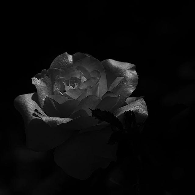 Even a falsehood is beautiful.....#worldcaptures #royalsnappingartists#myighub #Bnw_captures #bnw_fabulous #all_bnwshots #sombrebw #friendsinbnw #Rsa_bnw #Rustlord_unity #bnw_lombardia_member #modefinedbw #insta_pick_bw  #pr0ject_bnw #trb_bnw #tgif_bnw #foto_blackwhite #dof_addicts #great_bnw_nature #bnw_sweden #igs_bnw #Thehub_bnw #fingerprintofgod #naturehippys_ #Nature_brilliance_bnw #GrammerCollective #bwgrammer #bewitched_flowers