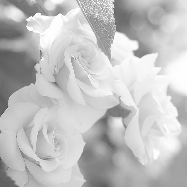 Texture of paradise.....#worldcaptures #royalsnappingartists#myighub #Bnw_captures #bnw_fabulous #all_bnwshots #sombrebw #friendsinbnw #Rsa_bnw #Rustlord_unity #bnw_lombardia_member #modefinedbw #insta_pick_bw  #pr0ject_bnw #trb_bnw #tgif_bnw #foto_blackwhite #dof_addicts #great_bnw_nature #bnw_sweden #igs_bnw #Thehub_bnw #fingerprintofgod #naturehippys_ #Nature_brilliance_bnw #GrammerCollective #bwgrammer #bewitched_flowers