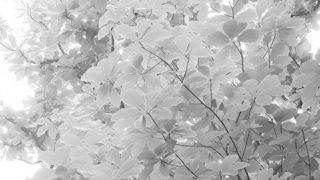 Green light falls…..#worldcaptures #royalsnappingartists#myighub #Bnw_captures #bnw_fabulous #all_bnwshots #sombrebw #friendsinbnw #Rsa_bnw #Rustlord_unity #bnw_lombardia_member #modefinedbw #insta_pick_bw  #pr0ject_bnw #trb_bnw #tgif_bnw #foto_blackwhite #dof_addicts #great_bnw_nature #bnw_sweden #igs_bnw #Thehub_bnw #fingerprintofgod #naturehippys_ #Nature_brilliance_bnw #GrammerCollective #bwgrammer #bewitched_flowers