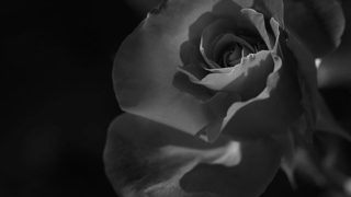 Une flamme tranquille…..#worldcaptures #royalsnappingartists#myighub #Bnw_captures #bnw_fabulous #all_bnwshots #sombrebw #friendsinbnw #Rsa_bnw #Rustlord_unity #bnw_lombardia_member #modefinedbw #insta_pick_bw  #pr0ject_bnw #trb_bnw #tgif_bnw #foto_blackwhite #dof_addicts #great_bnw_nature #bnw_sweden #igs_bnw #Thehub_bnw #fingerprintofgod #naturehippys_ #Nature_brilliance_bnw #GrammerCollective #bwgrammer #bewitched_flowers