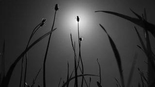 Those who receive the sun…..#worldcaptures #royalsnappingartists#myighub #Bnw_captures #bnw_fabulous #all_bnwshots #sombrebw #friendsinbnw #Rsa_bnw #Rustlord_unity #bnw_lombardia_member #modefinedbw #insta_pick_bw  #pr0ject_bnw #trb_bnw #tgif_bnw #foto_blackwhite #dof_addicts #great_bnw_nature #bnw_sweden #igs_bnw #Thehub_bnw #fingerprintofgod #naturehippys_ #Nature_brilliance_bnw #GrammerCollective #bwgrammer #bewitched_flowers